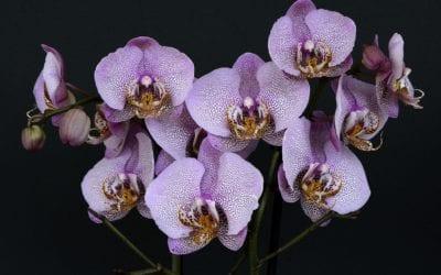 Curiosidade: Conheça Alguns Nomes de Flores Exóticas e Raras