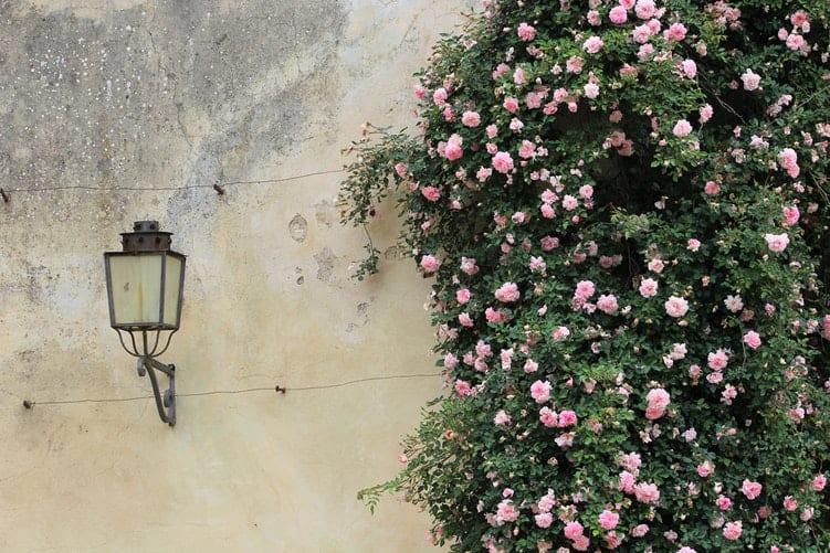 Aprenda a Montar uma Decoração de Painel com Flores