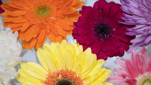 enfeite a seu jardim com flores em garrafa pet