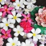 confira algumas sugestões de flores para eventos