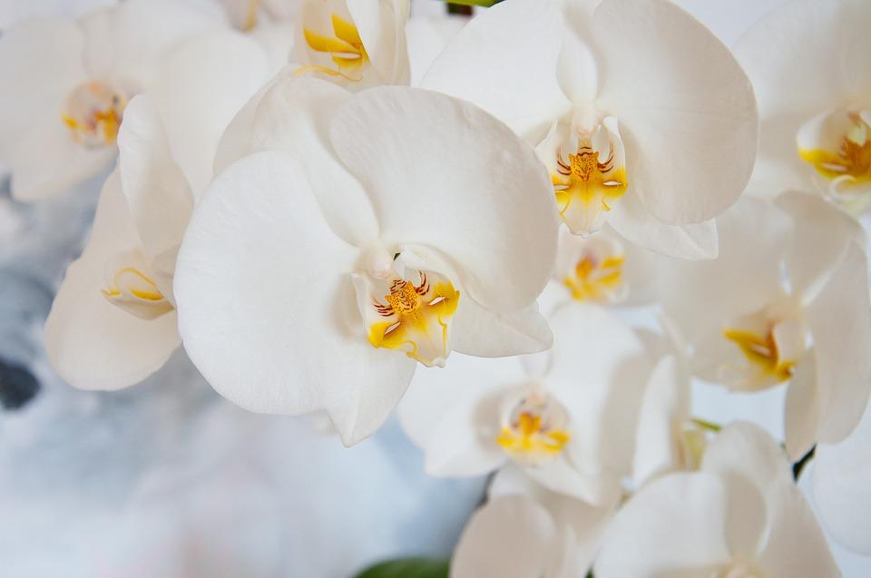 saiba como cuidar de orquídeas