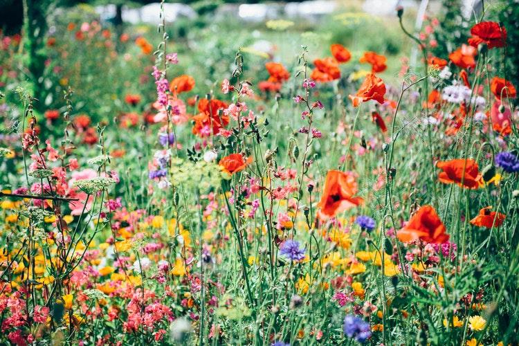 conheça algumas flores que resistem ao sol