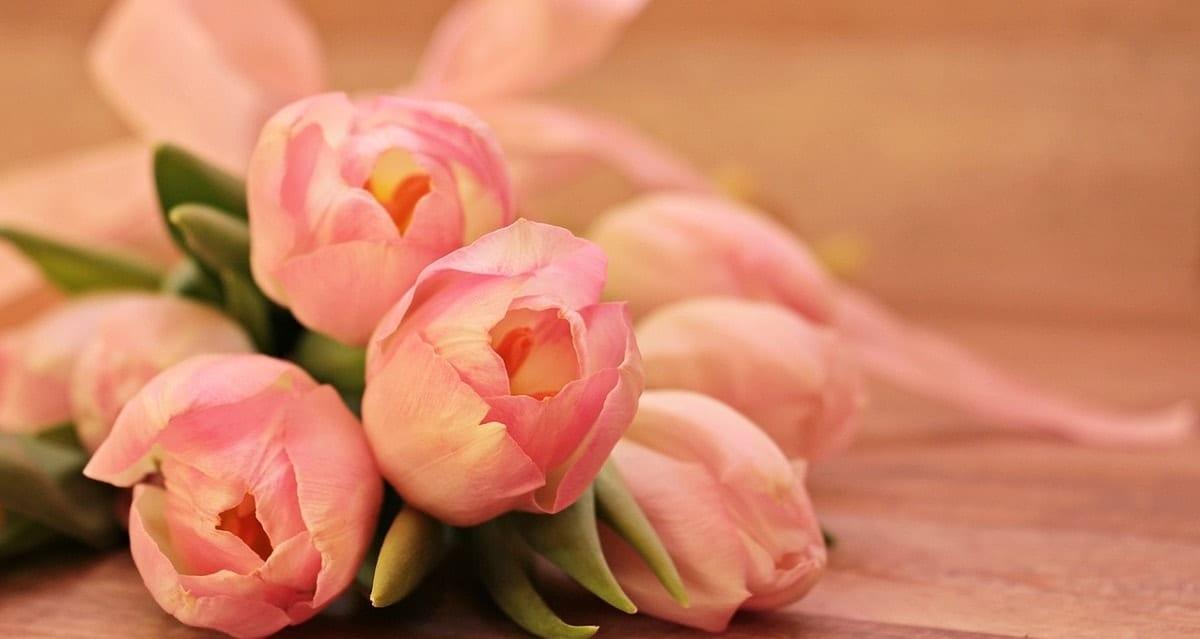 tulipas para pedir desculpas