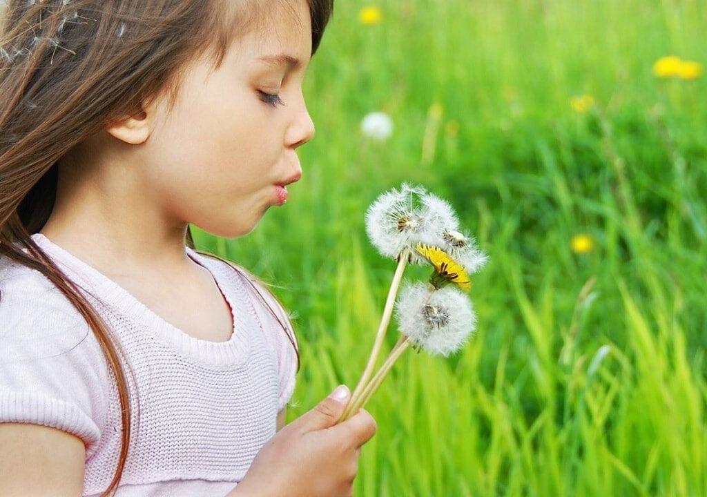 Benefícios medicinais da Flor Dente-de-Leão