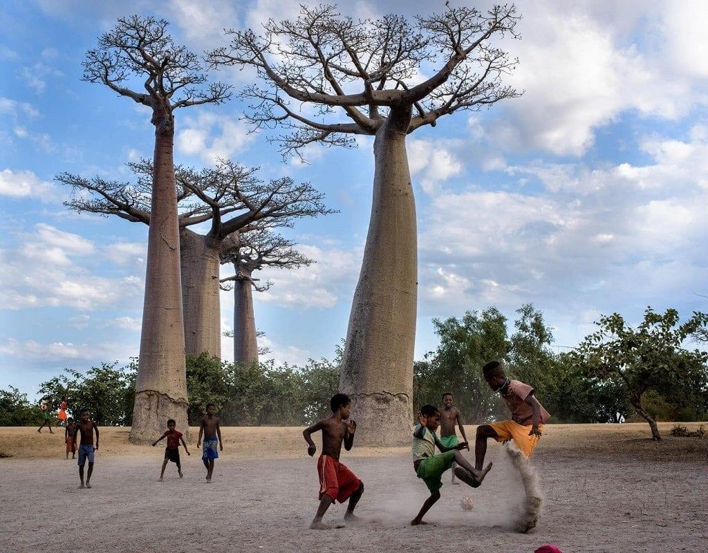 história do Baobá