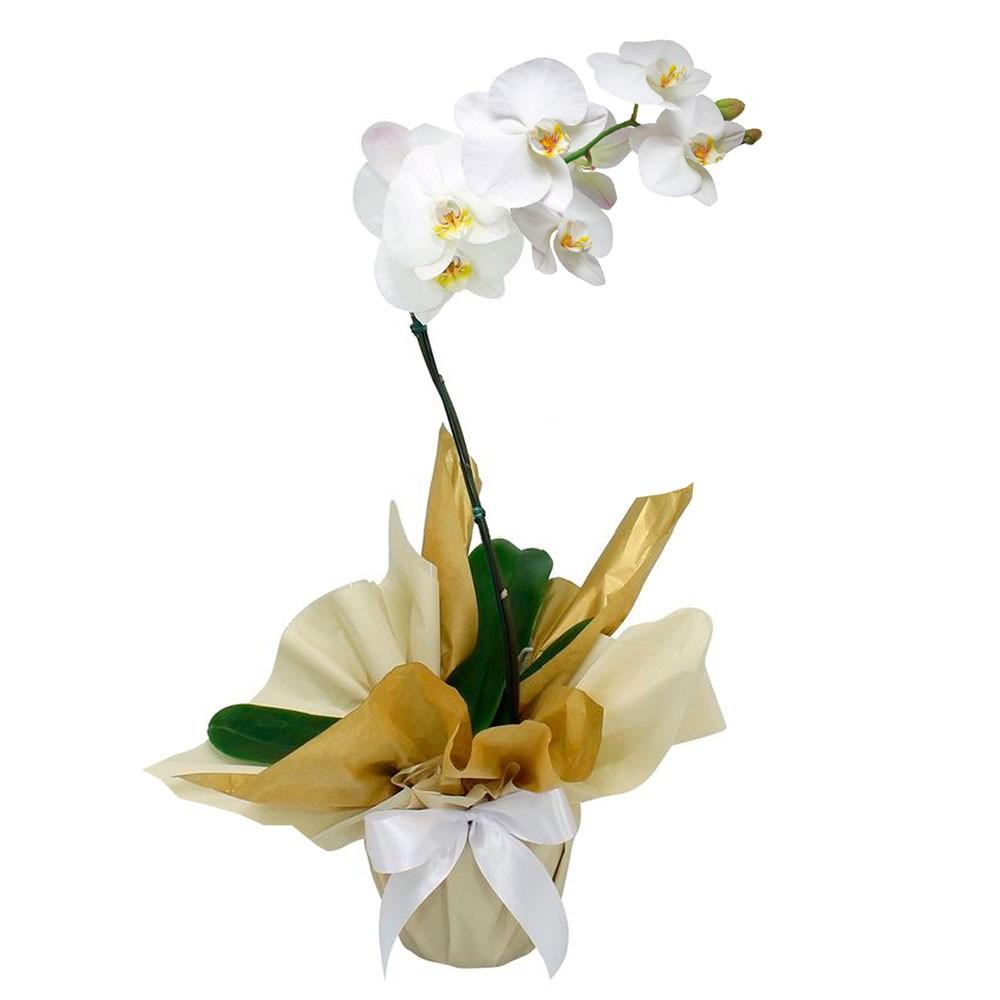 presente 15 anos orquidea branca
