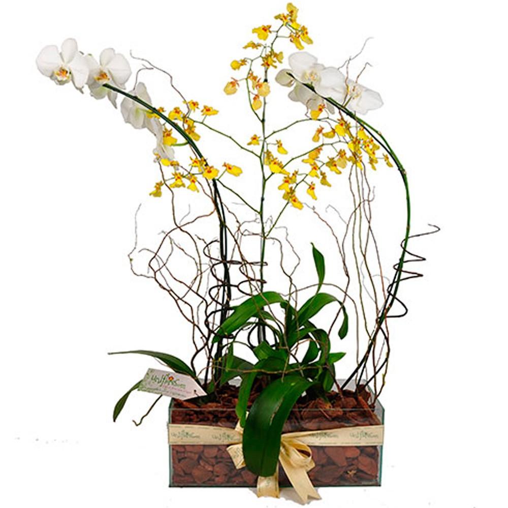 tipos de orquideas arranjo luxo