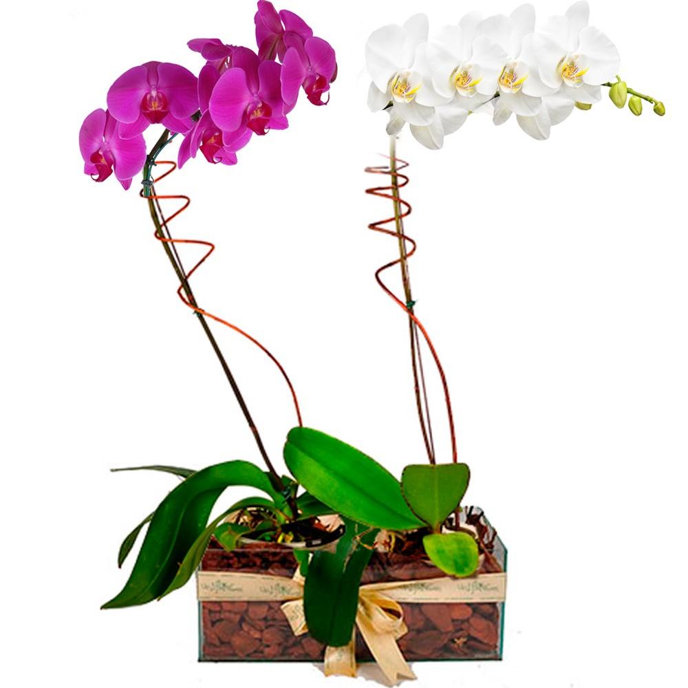 tipos de orquideas arranjo