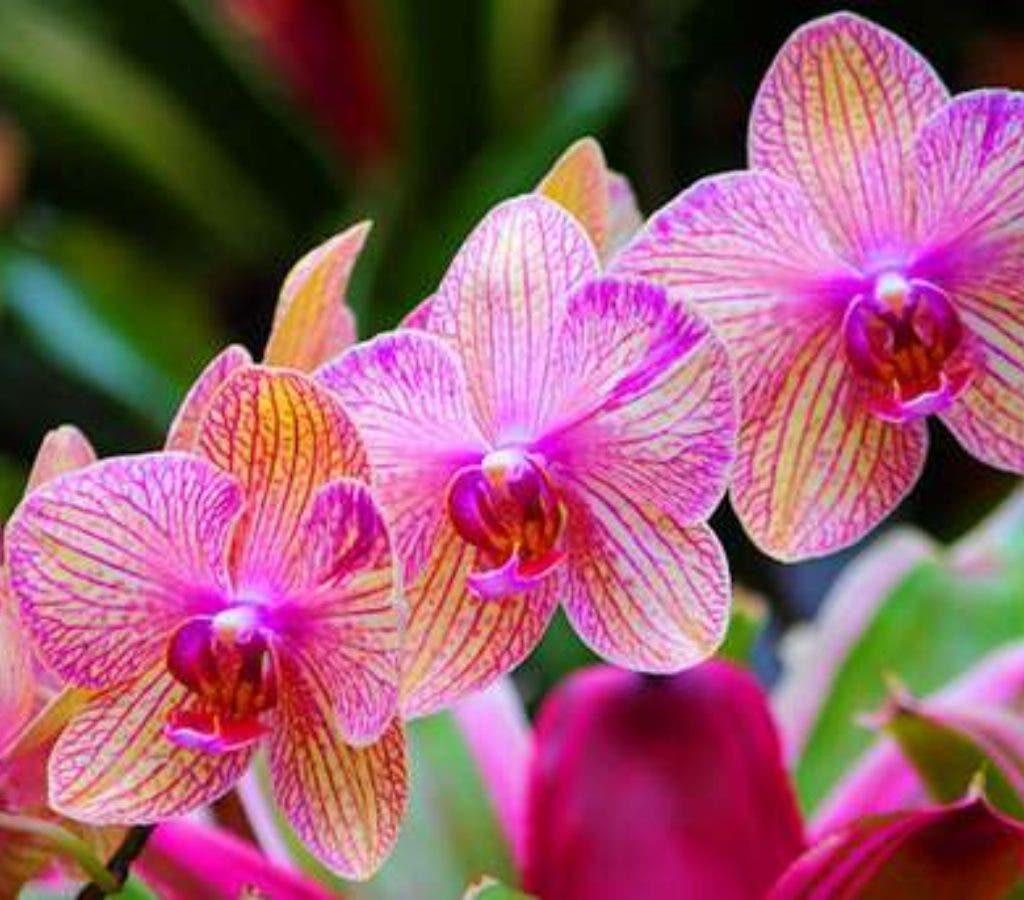 flor de cada signo orquideas